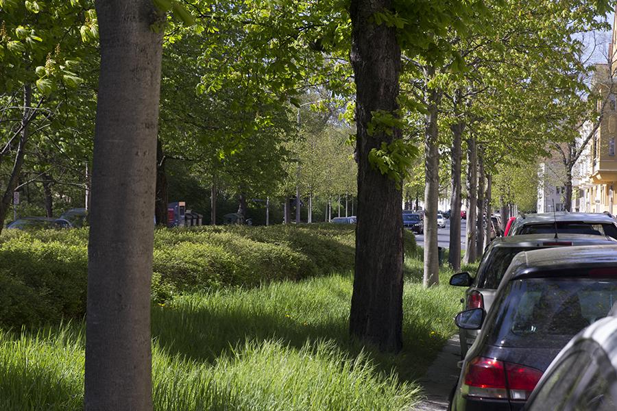 Baumschutzsatzung auf dem Prüfstand