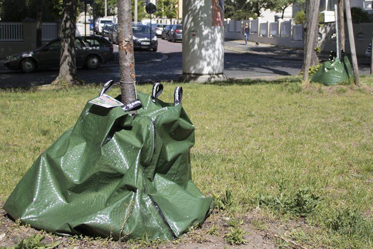 Bewässerung von Jungbäumen