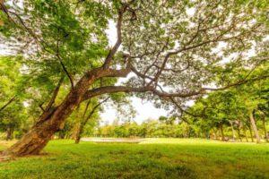 Mehr Schutz für Bestandsbäume bei Bauvorhaben