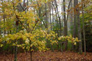 Read more about the article Ein Bestattungswald für Halle