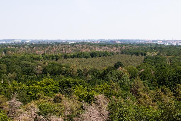 Der hallesche Stadtwald benötigt bessere Pflege