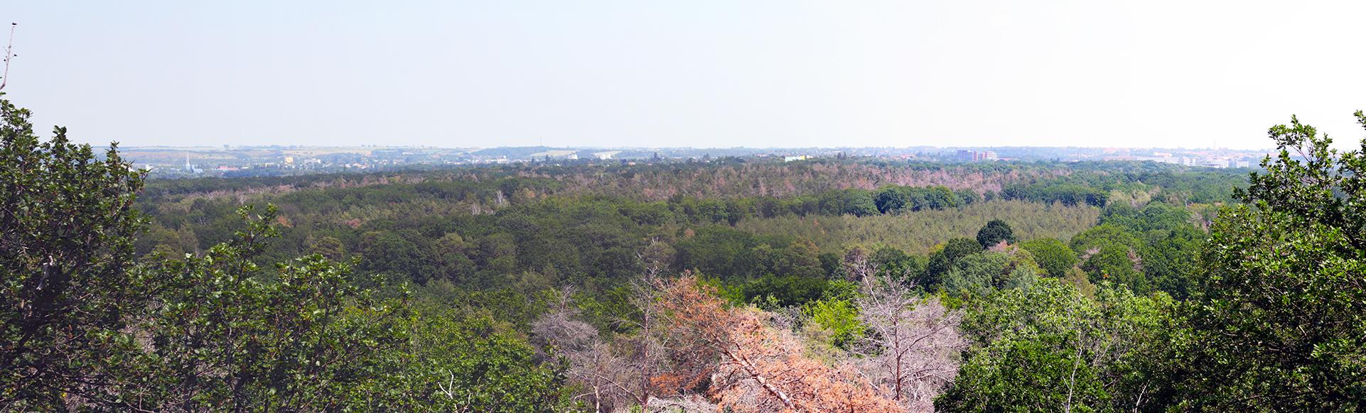 Panorama der Dölauer Heide mit Blick vom Kolkturm in Halle (Saale)